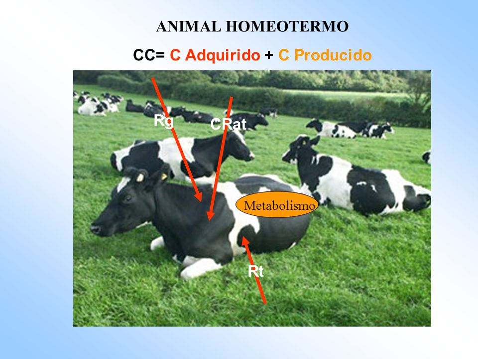 CC= C Adquirido + C Producido