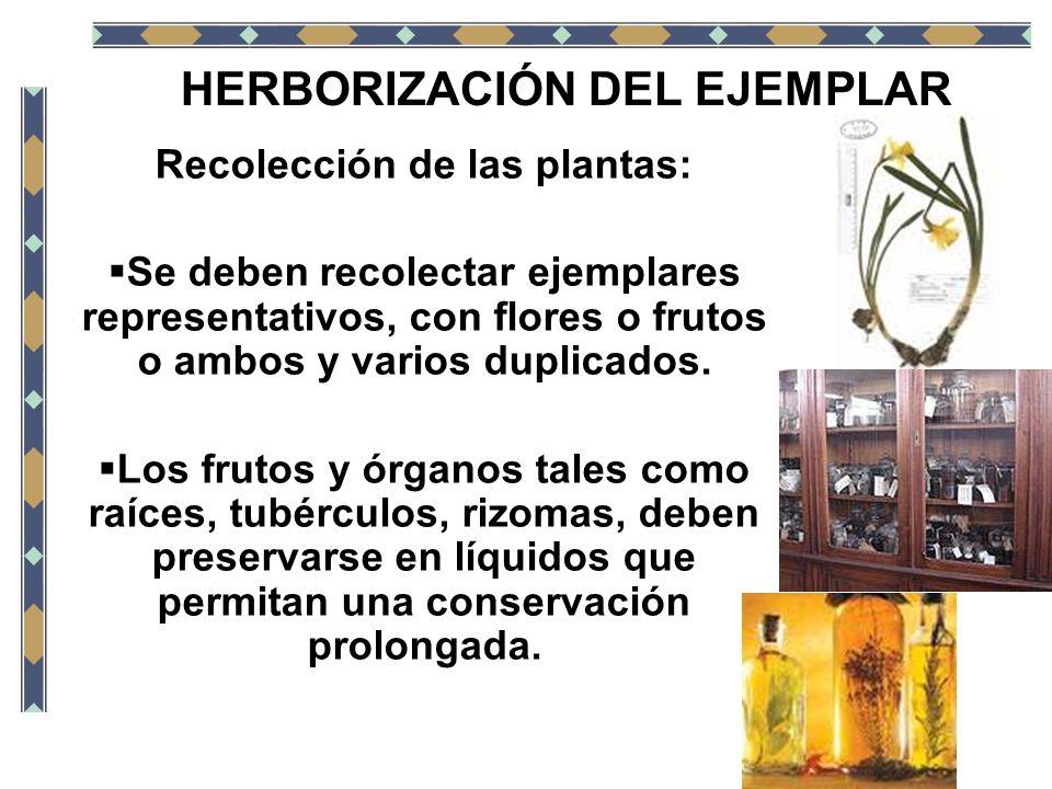 Recolección de las plantas: