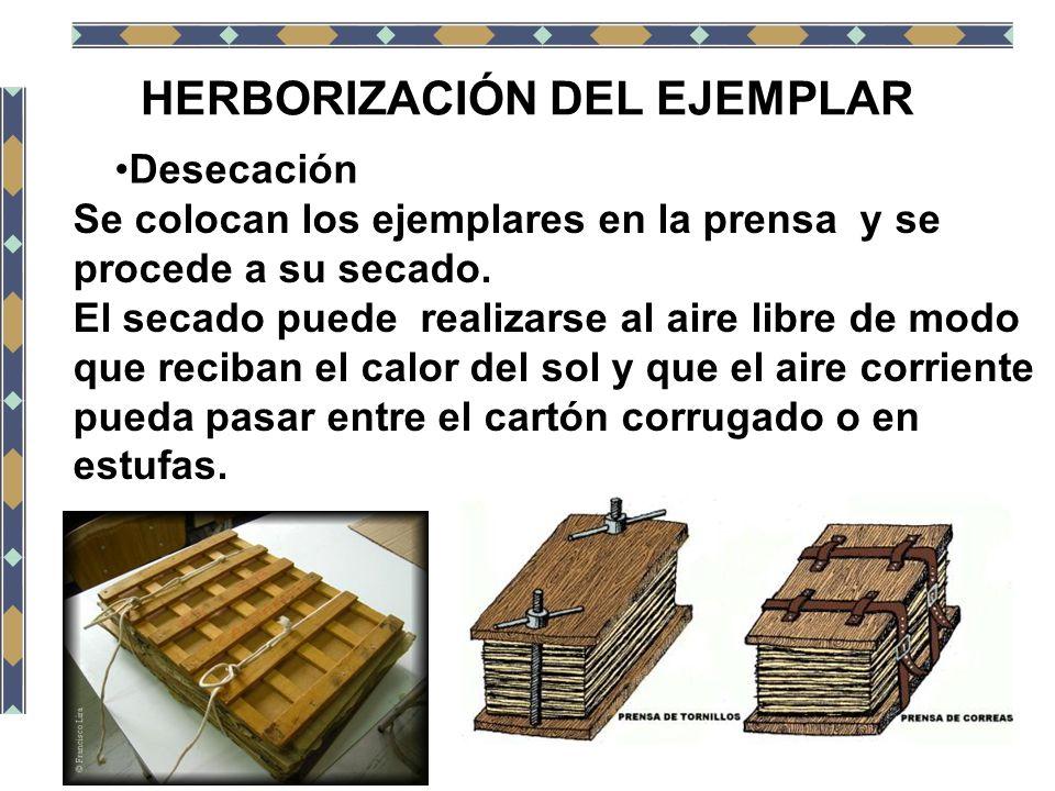 HERBORIZACIÓN DEL EJEMPLAR