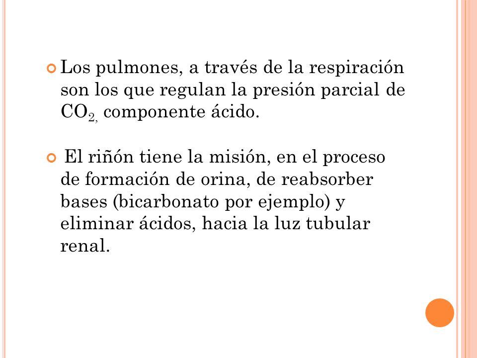 Los pulmones, a través de la respiración son los que regulan la presión parcial de CO2, componente ácido.