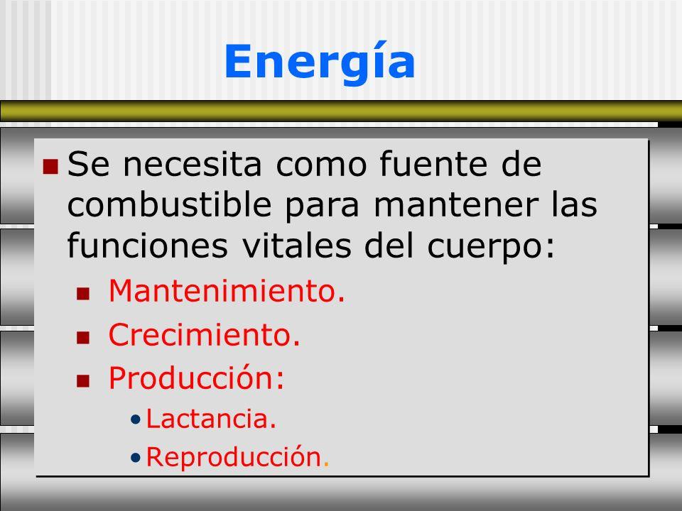 Energía Se necesita como fuente de combustible para mantener las funciones vitales del cuerpo: Mantenimiento.