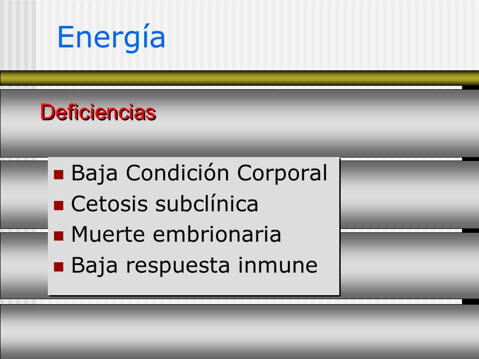 Energía Deficiencias Baja Condición Corporal Cetosis subclínica