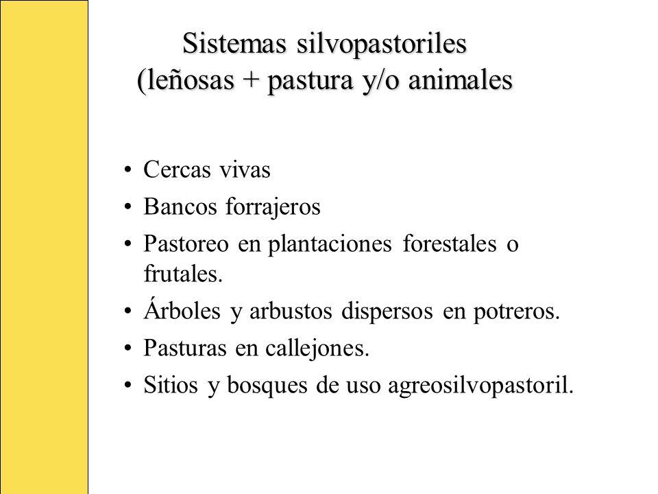 Sistemas silvopastoriles (leñosas + pastura y/o animales