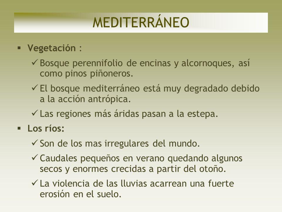 MEDITERRÁNEO Vegetación :