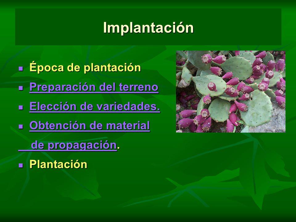 Implantación Época de plantación Preparación del terreno