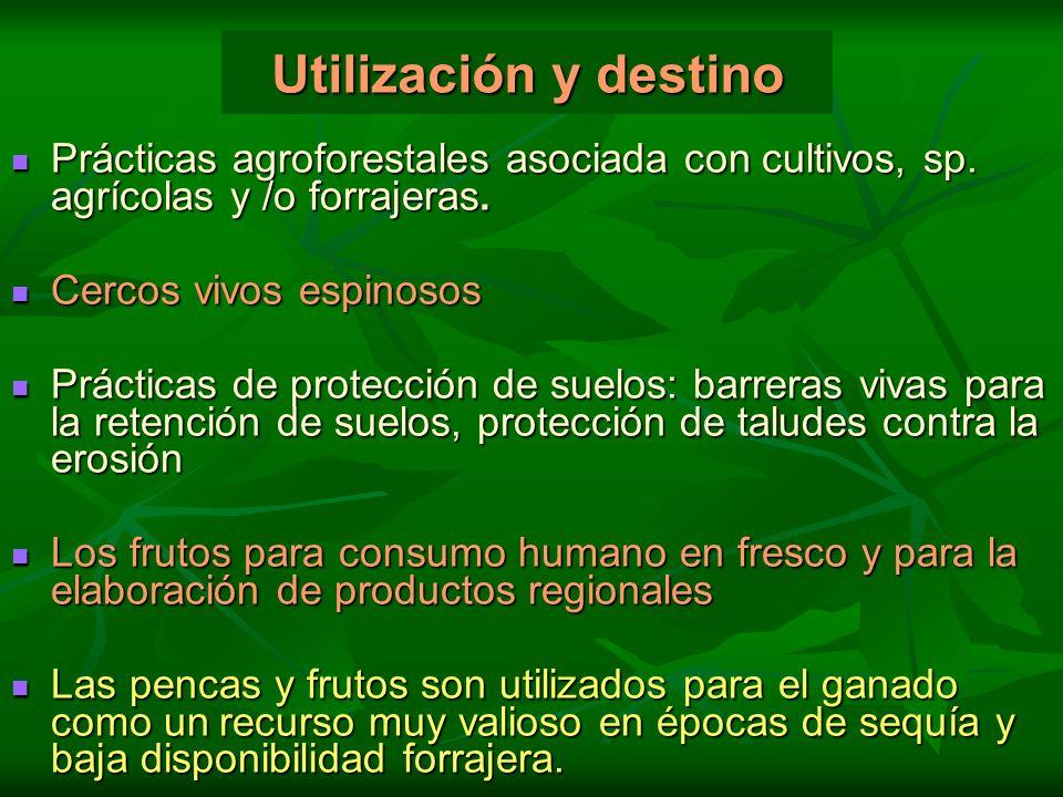 Utilización y destino Prácticas agroforestales asociada con cultivos, sp. agrícolas y /o forrajeras.