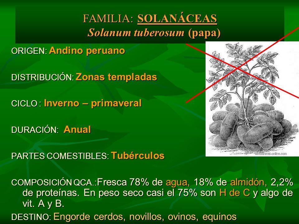 FAMILIA: SOLANÁCEAS Solanum tuberosum (papa)