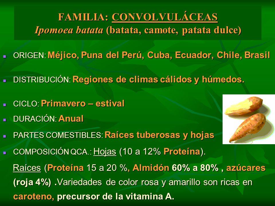 FAMILIA: CONVOLVULÁCEAS Ipomoea batata (batata, camote, patata dulce)