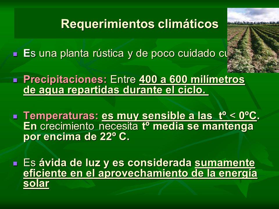 Requerimientos climáticos