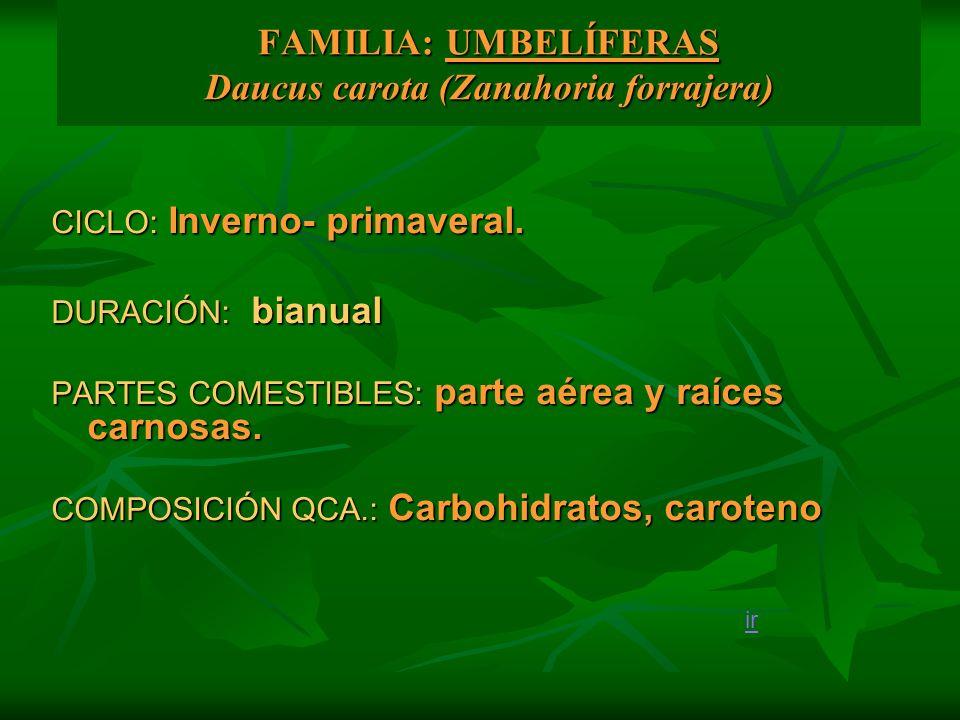 FAMILIA: UMBELÍFERAS Daucus carota (Zanahoria forrajera)