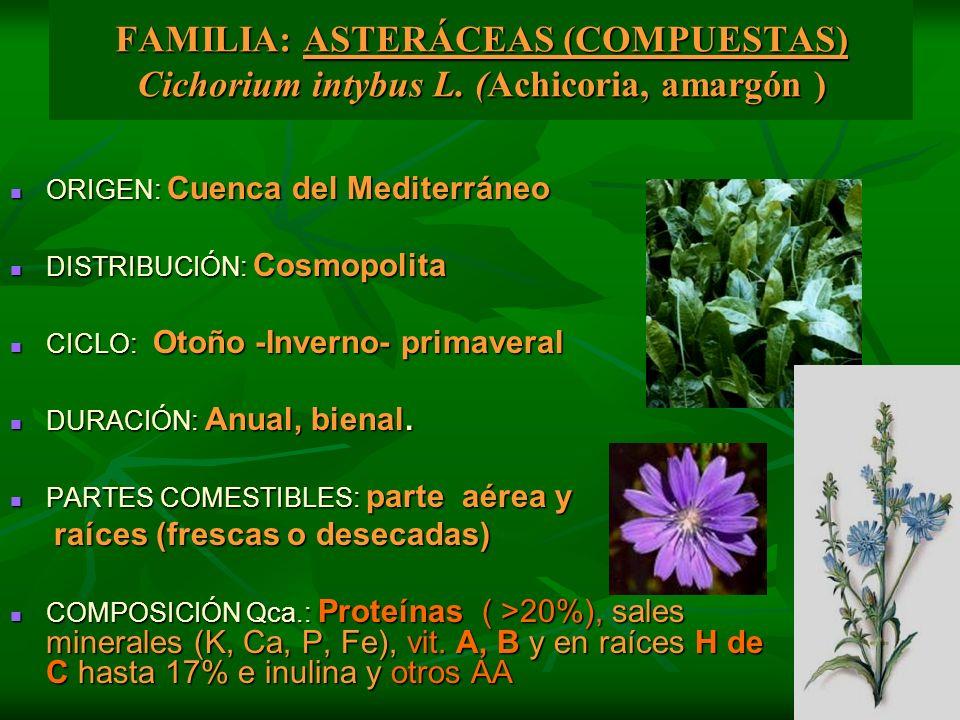 FAMILIA: ASTERÁCEAS (COMPUESTAS) Cichorium intybus L