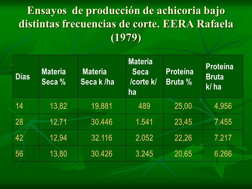 Ensayos de producción de achicoria bajo distintas frecuencias de corte