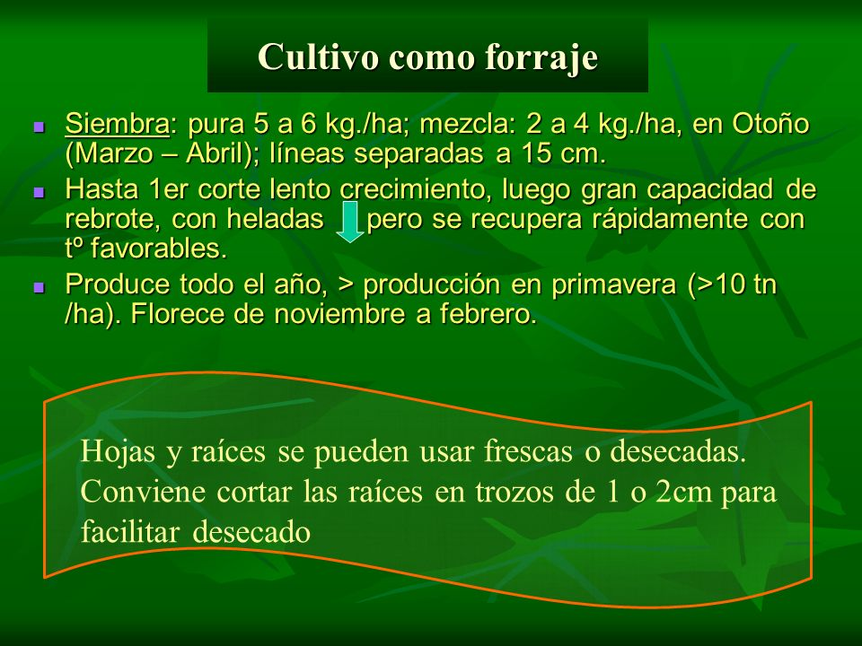 Cultivo como forrajeSiembra: pura 5 a 6 kg./ha; mezcla: 2 a 4 kg./ha, en Otoño (Marzo – Abril); líneas separadas a 15 cm.