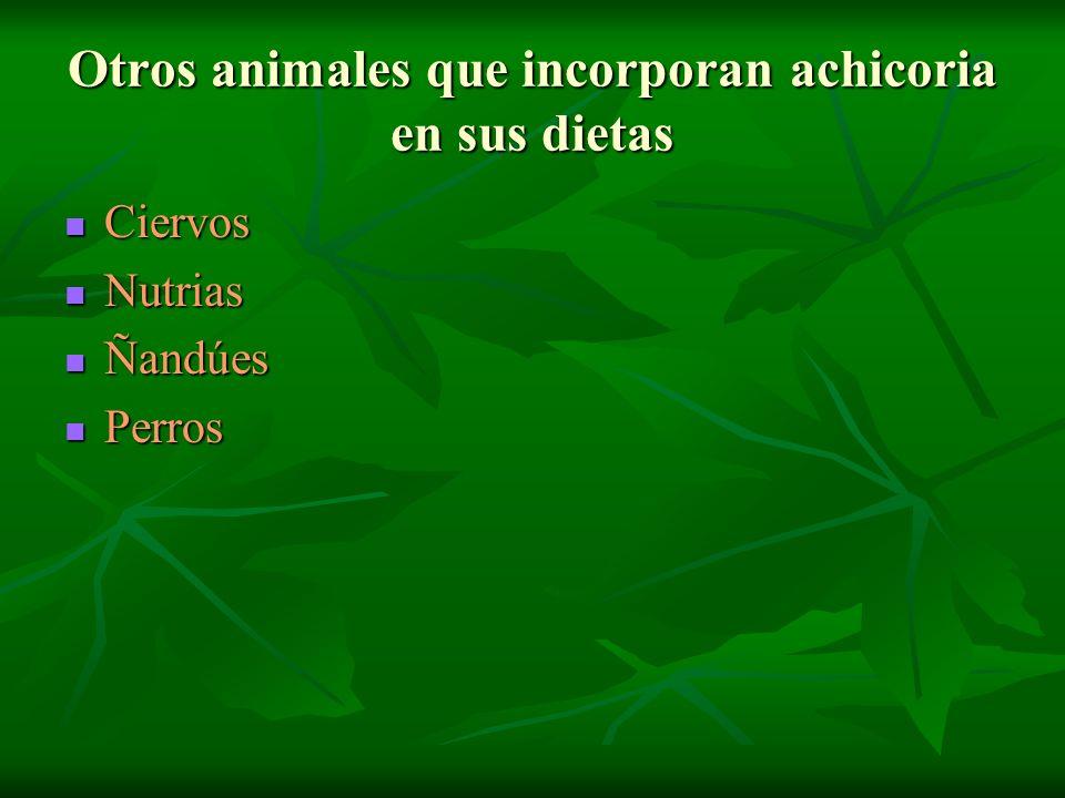 Otros animales que incorporan achicoria en sus dietas