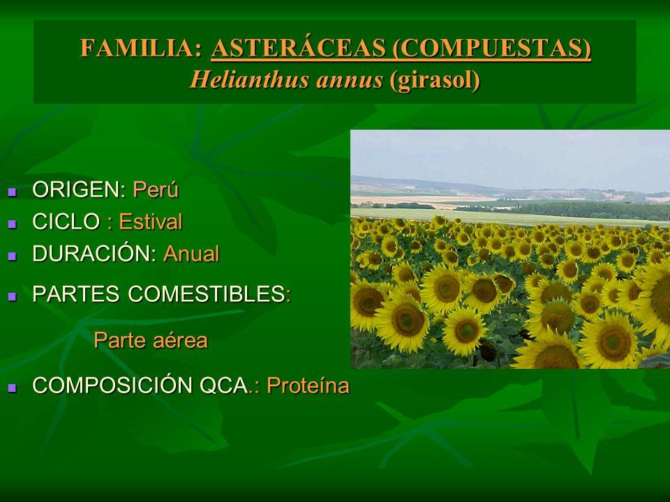 FAMILIA: ASTERÁCEAS (COMPUESTAS) Helianthus annus (girasol)
