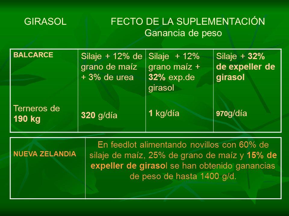 GIRASOL FECTO DE LA SUPLEMENTACIÓN Ganancia de peso