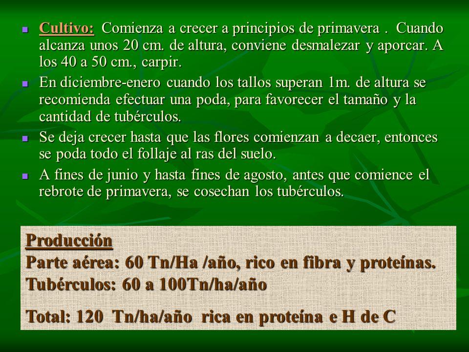 Parte aérea: 60 Tn/Ha /año, rico en fibra y proteínas.