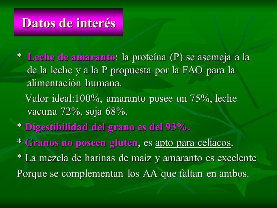 Datos de interés* Leche de amaranto: la proteína (P) se asemeja a la de la leche y a la P propuesta por la FAO para la alimentación humana.