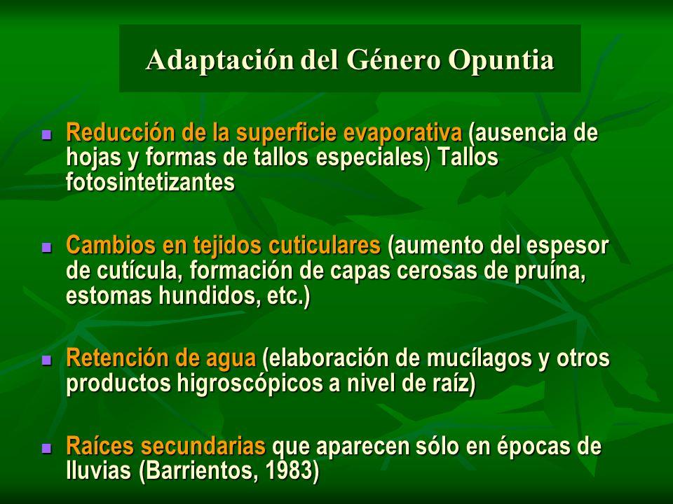 Adaptación del Género Opuntia