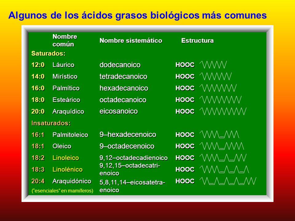 Algunos de los ácidos grasos biológicos más comunes