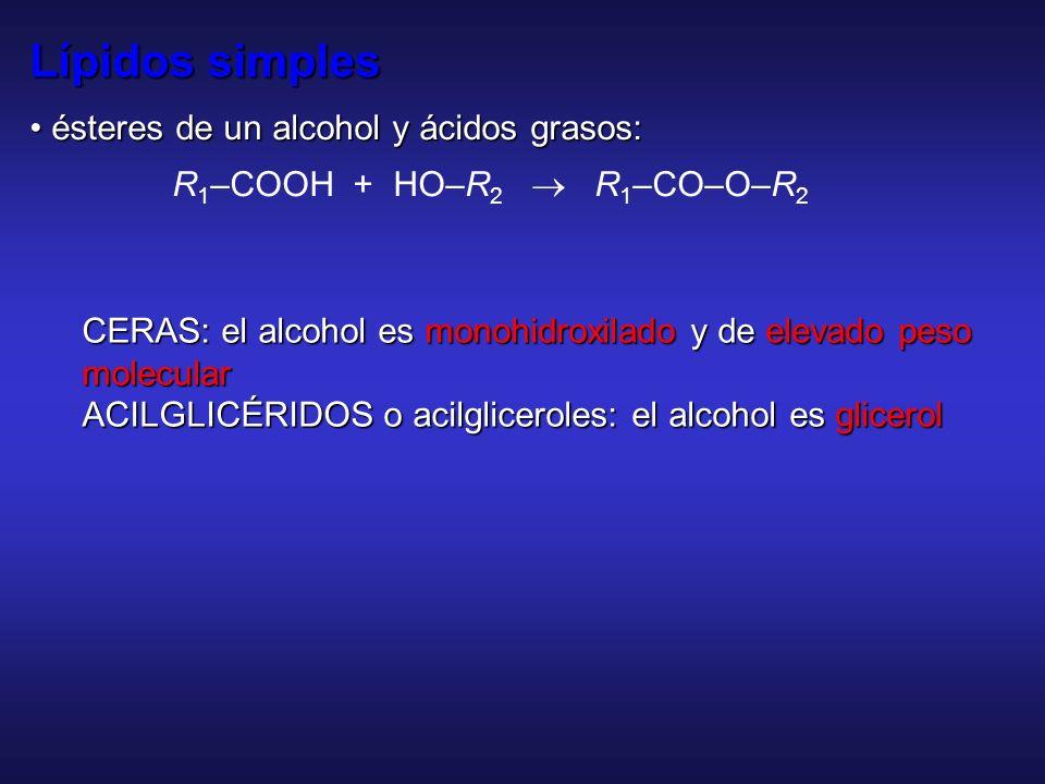Lípidos simples • ésteres de un alcohol y ácidos grasos: