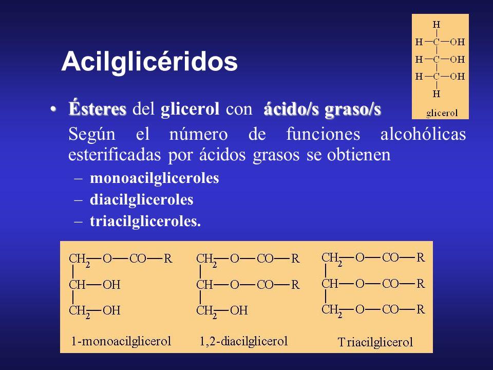 Acilglicéridos Ésteres del glicerol con ácido/s graso/s