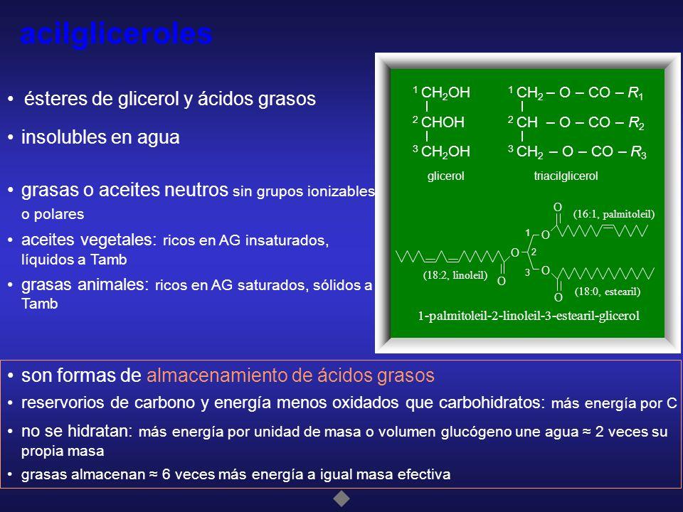 acilgliceroles • ésteres de glicerol y ácidos grasos