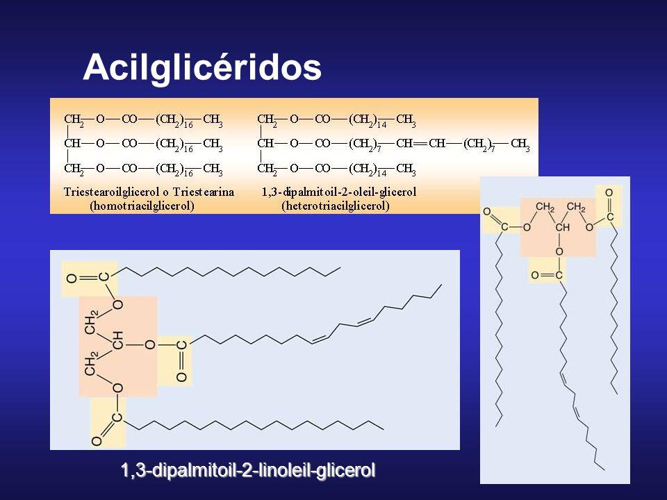 Acilglicéridos 1,3-dipalmitoil-2-linoleil-glicerol