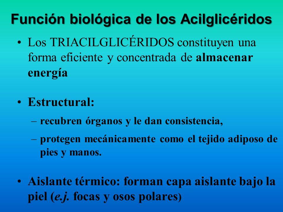 Función biológica de los Acilglicéridos
