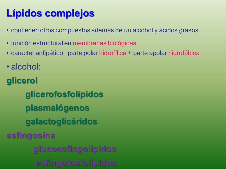 Lípidos complejos • alcohol: glicerol glicerofosfolípidos