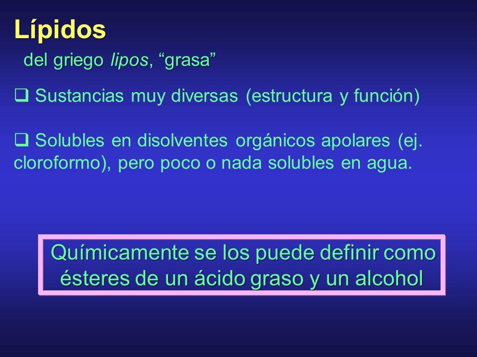 Lípidos Sustancias muy diversas (estructura y función)