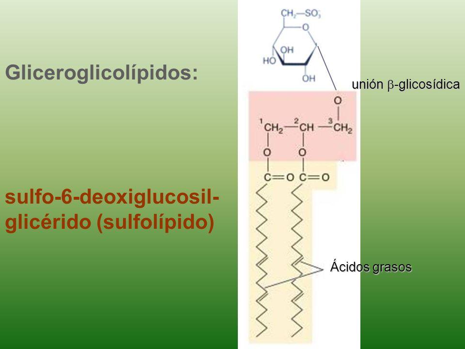 Gliceroglicolípidos: sulfo-6-deoxiglucosil-glicérido (sulfolípido)