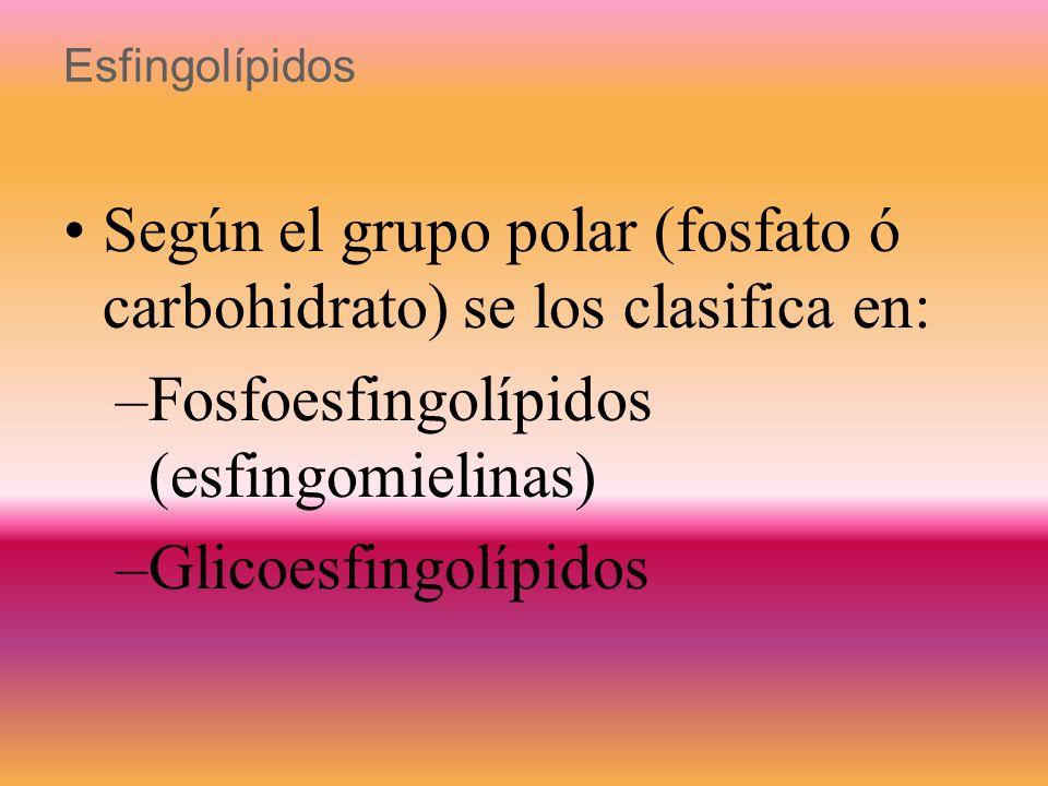 Según el grupo polar (fosfato ó carbohidrato) se los clasifica en: