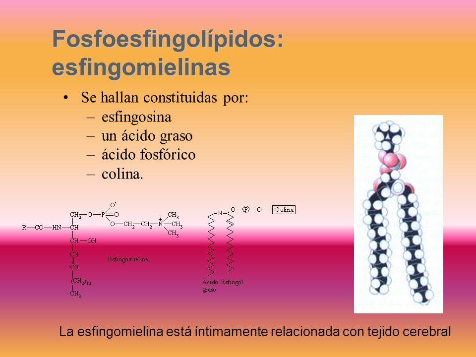 Fosfoesfingolípidos: esfingomielinas