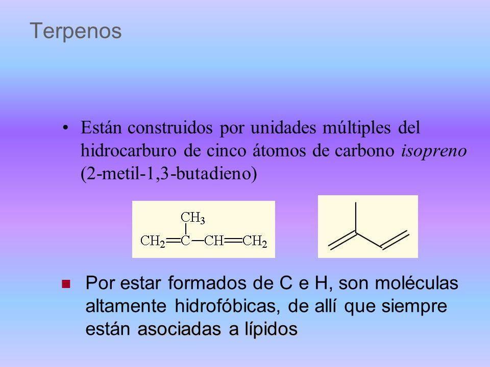 Terpenos Están construidos por unidades múltiples del hidrocarburo de cinco átomos de carbono isopreno (2-metil-1,3-butadieno)