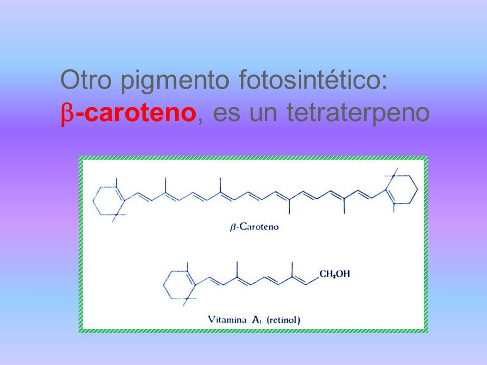 Otro pigmento fotosintético: b-caroteno, es un tetraterpeno