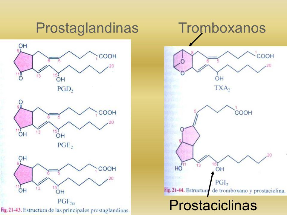 Prostaglandinas Tromboxanos
