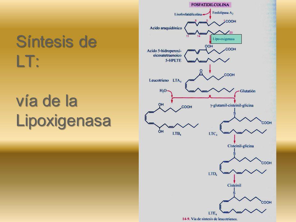 Síntesis de LT: vía de la Lipoxigenasa