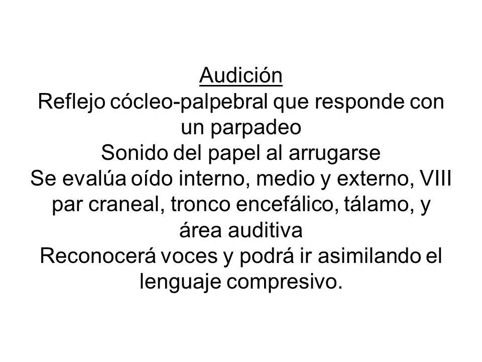 Audición Reflejo cócleo-palpebral que responde con un parpadeo Sonido del papel al arrugarse Se evalúa oído interno, medio y externo, VIII par craneal, tronco encefálico, tálamo, y área auditiva Reconocerá voces y podrá ir asimilando el lenguaje compresivo.