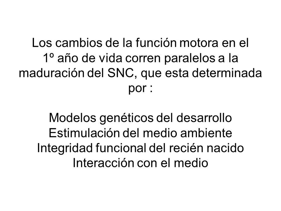 Los cambios de la función motora en el 1º año de vida corren paralelos a la maduración del SNC, que esta determinada por : Modelos genéticos del desarrollo Estimulación del medio ambiente Integridad funcional del recién nacido Interacción con el medio