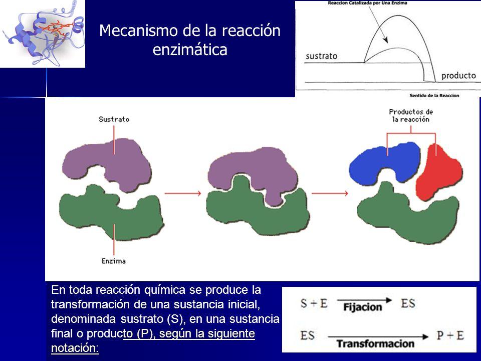 Mecanismo de la reacción enzimática