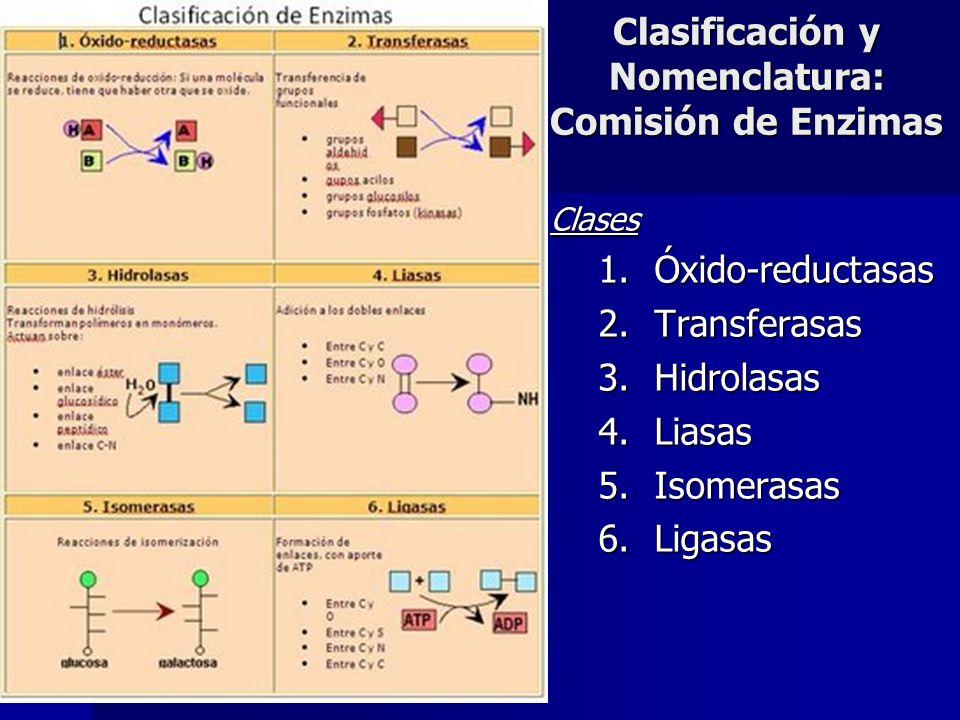 Clasificación y Nomenclatura: Comisión de Enzimas