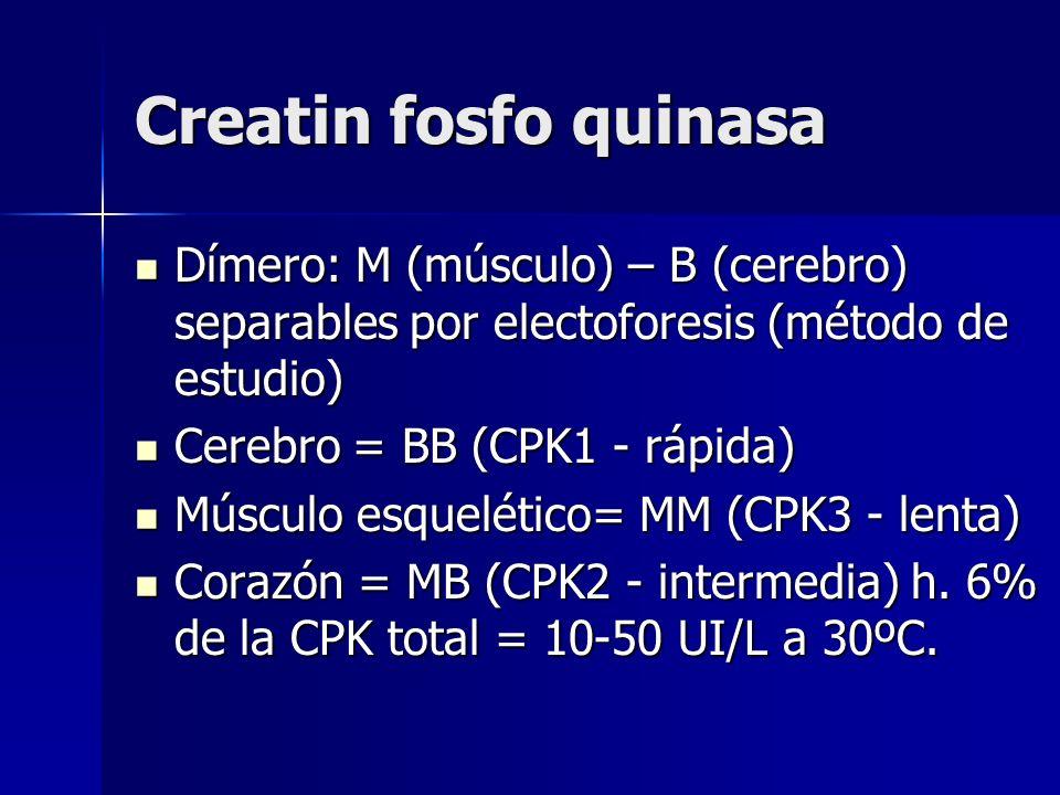 Creatin fosfo quinasa Dímero: M (músculo) – B (cerebro) separables por electoforesis (método de estudio)