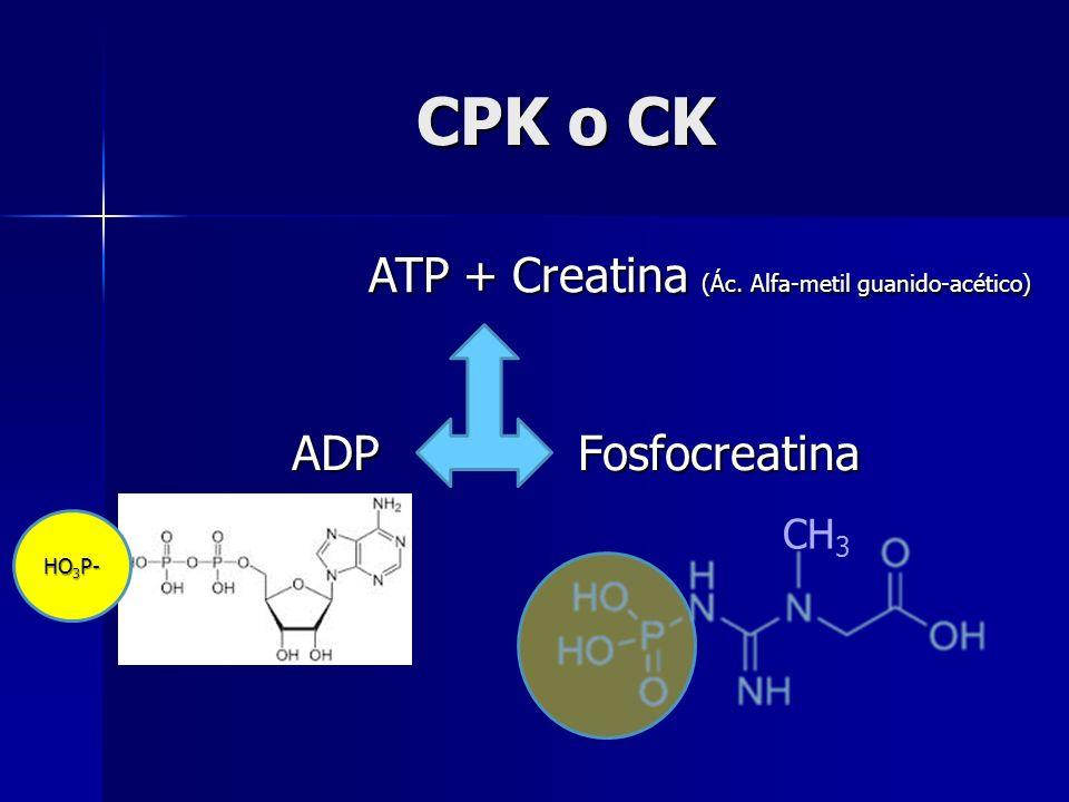 CPK o CK ATP + Creatina (Ác. Alfa-metil guanido-acético) ADP