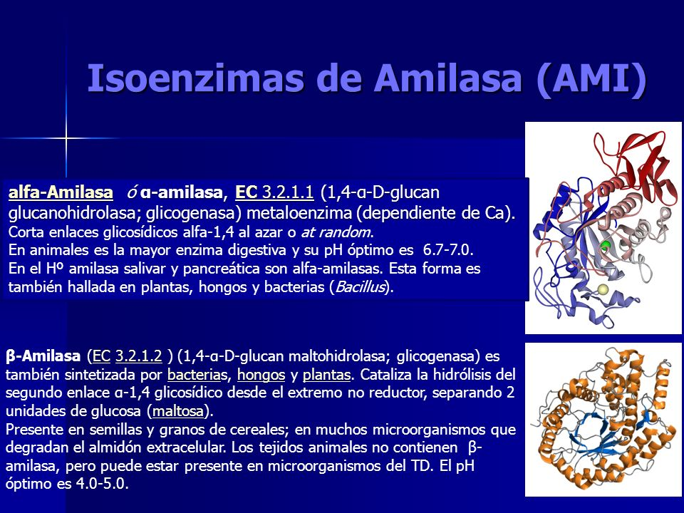 Isoenzimas de Amilasa (AMI)