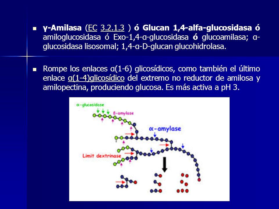 γ-Amilasa (EC 3.2.1.3 ) ó Glucan 1,4-alfa-glucosidasa ó amiloglucosidasa ó Exo-1,4-α-glucosidasa ó glucoamilasa; α-glucosidasa lisosomal; 1,4-α-D-glucan glucohidrolasa.