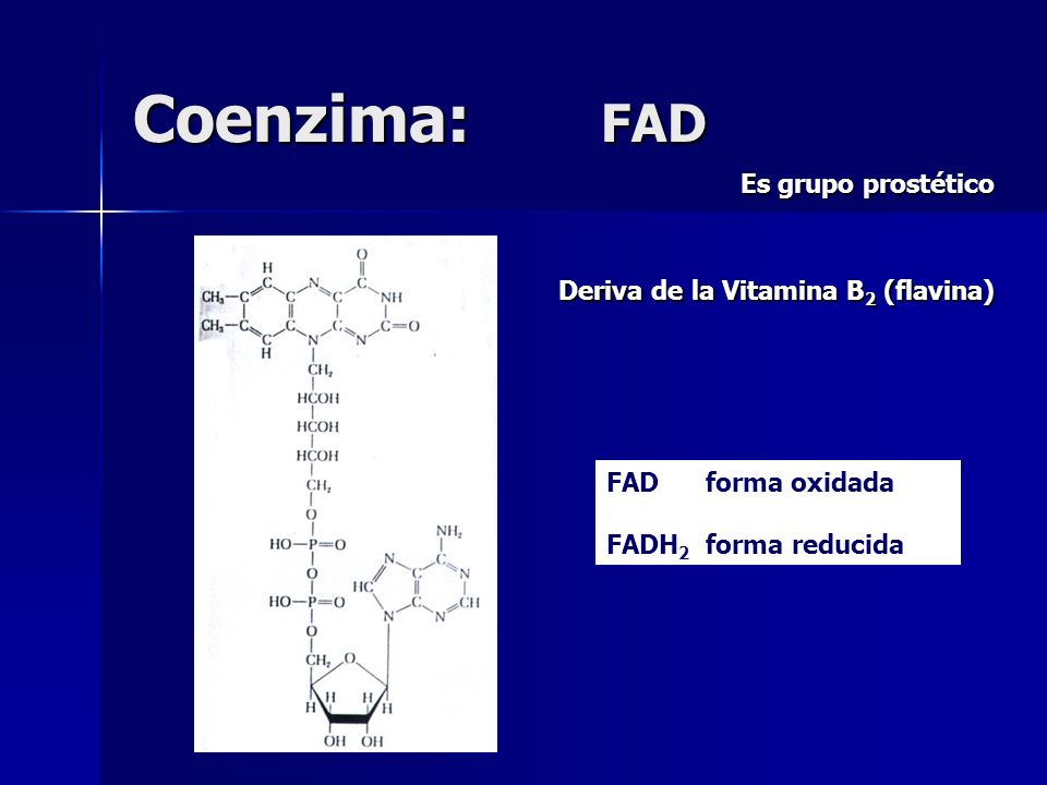 Coenzima: FAD Es grupo prostético Deriva de la Vitamina B2 (flavina)