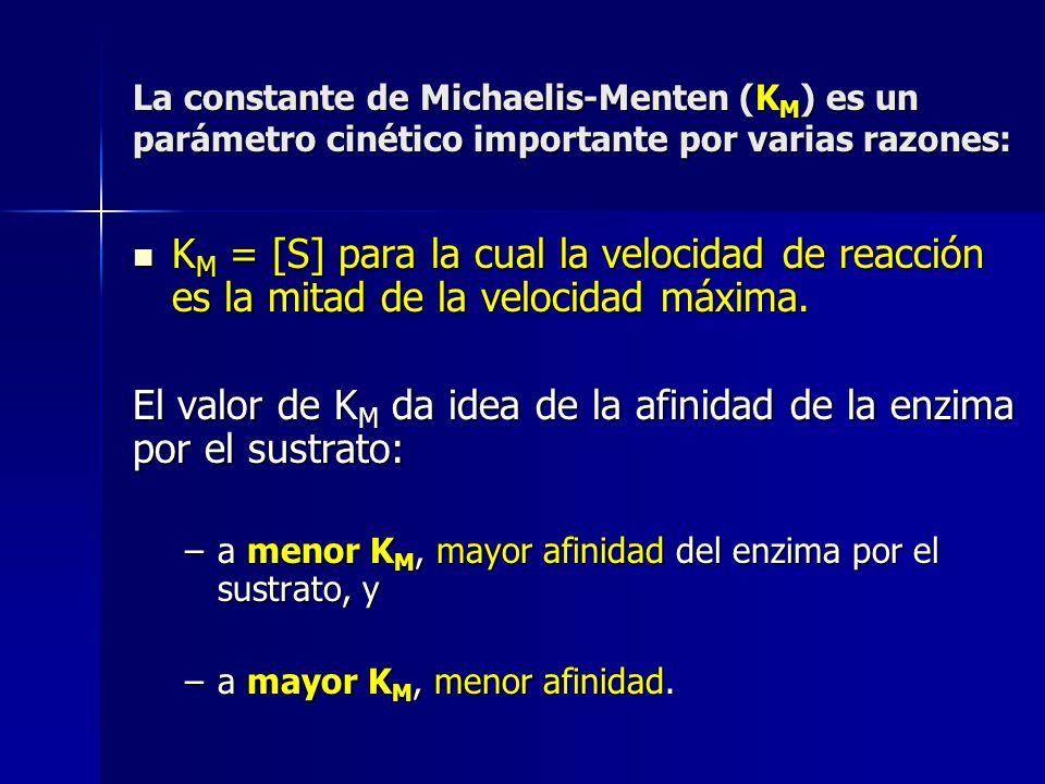 El valor de KM da idea de la afinidad de la enzima por el sustrato: