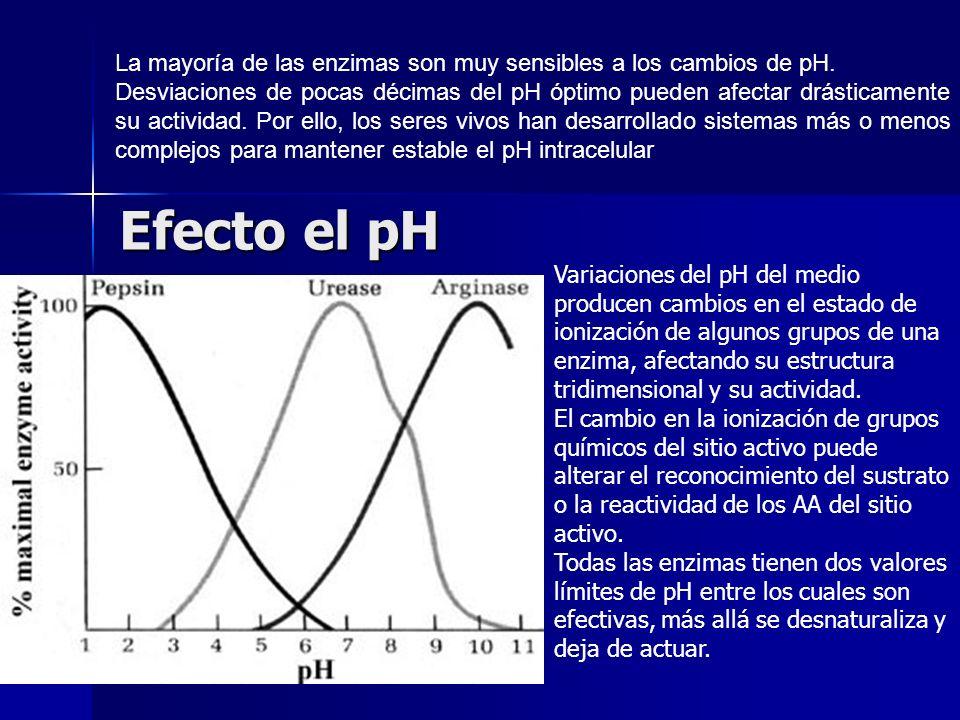La mayoría de las enzimas son muy sensibles a los cambios de pH.