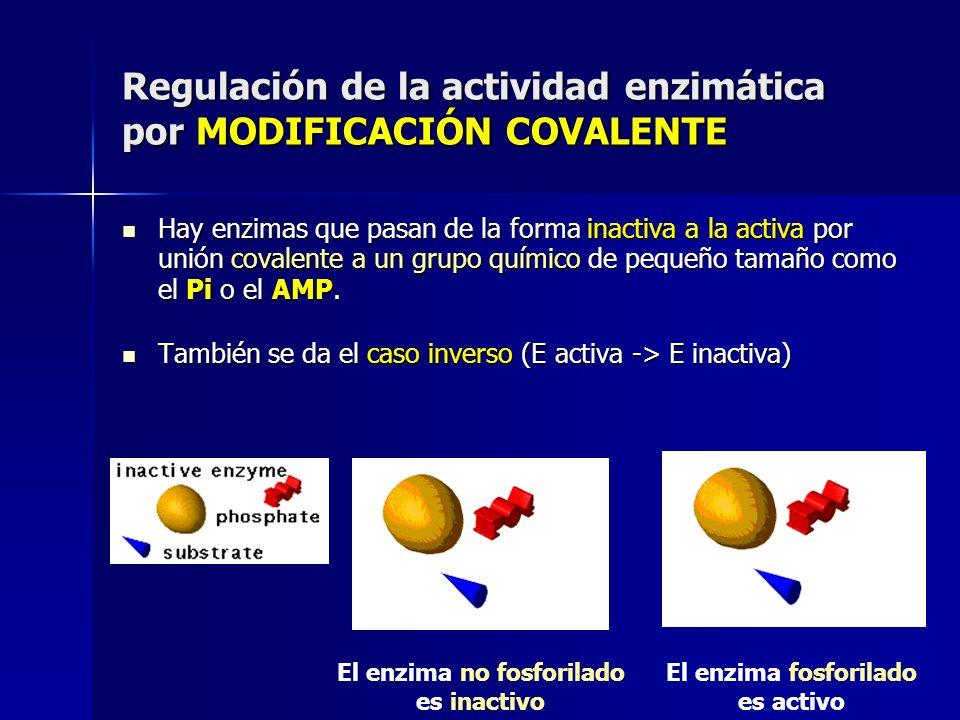 Regulación de la actividad enzimática por MODIFICACIÓN COVALENTE